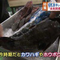 11月3日_今日ドキ17時台_未利用魚を利用せよ!